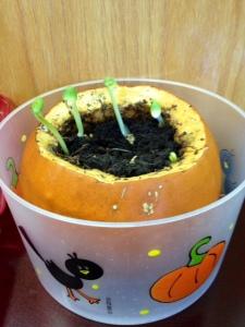 Pumpkin Prediction Center